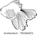 goldfish carp. goldfish carp... | Shutterstock .eps vector #781066021