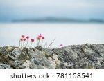 Wild Coastal Flowers Growing On ...