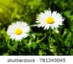 flower in forest closeup | Shutterstock . vector #781243045