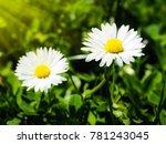 flower in forest closeup | Shutterstock . vector #781243045