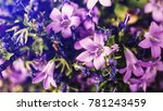 beautiful purple flowers closeup | Shutterstock . vector #781243459