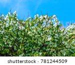 beautiful plant closeup shot | Shutterstock . vector #781244509