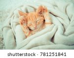 little red kitten. cat  lies on ... | Shutterstock . vector #781251841