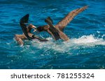 nz petrels fighting of the... | Shutterstock . vector #781255324