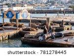 Pier 39  Fishermans Wharf Seal...