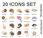 Different Kinds Of Nuts Cartoo...