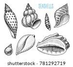 seashells or mollusca different ... | Shutterstock .eps vector #781292719