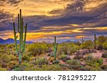Saguaros In Four Peaks...
