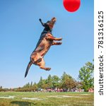 a dog playing fetch in a local... | Shutterstock . vector #781316125