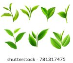 green tea leaf collection set.... | Shutterstock .eps vector #781317475