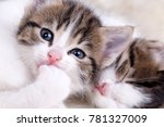 Stock photo the cute kitten baby cat 781327009