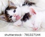 Stock photo the cute kitten baby cat 781327144