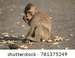 the monkeys are eating foods... | Shutterstock . vector #781375249