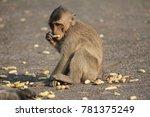 the monkeys are eating foods... | Shutterstock . vector #781375249