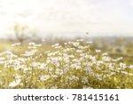 nature summer white flowers... | Shutterstock . vector #781415161