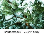 spruce branches powdered with... | Shutterstock . vector #781445209