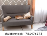 the gray sofa. grey sofa with... | Shutterstock . vector #781476175