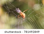 spider with a flying insect in...   Shutterstock . vector #781492849