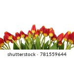 tongue fresh tulips usually... | Shutterstock . vector #781559644
