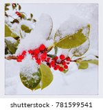 Snow And Holly Berries