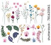 set of summer wild  floral... | Shutterstock .eps vector #781620061