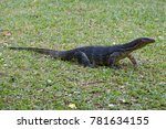 striped monitor lizard  water... | Shutterstock . vector #781634155
