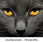 Photo Of Gray Cat Yellow Eyes