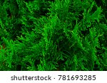 green natural background   Shutterstock . vector #781693285