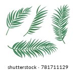 beautifil palm tree leaf ... | Shutterstock .eps vector #781711129
