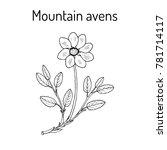 mountain avens  dryas...   Shutterstock .eps vector #781714117