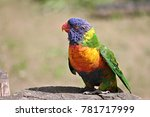 Colorful Parrot Trichoglossus...