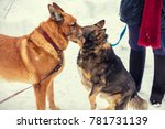 Two Dogs On Leash Sniffing To...