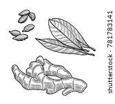 spices. ginger  bay leaf ... | Shutterstock .eps vector #781783141