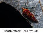 Assassin Bug Hanging On Tree...