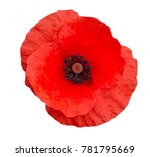 Bright red poppy flower...