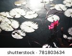 pink lotus flower in the pond | Shutterstock . vector #781803634