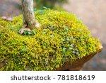 beautiful bonsai tree in the...   Shutterstock . vector #781818619