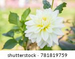 beautiful white flower in the...   Shutterstock . vector #781819759