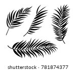 beautifil palm tree leaf ... | Shutterstock .eps vector #781874377