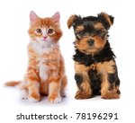 Stock photo little cute puppy of yorkshire terrier and red mixed breed kitten isolated on white two lovely 78196291