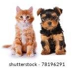 little cute puppy of yorkshire... | Shutterstock . vector #78196291