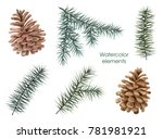 spruce. floral set. pine cones. | Shutterstock . vector #781981921