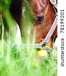 Portrait Of Grazing Bay Horse...
