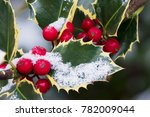 Close Up Of Common Holly With...