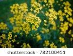 little yellow mustard flowers | Shutterstock . vector #782100451