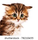 Stock photo cute little siberian kitten isolated on white background 78210655