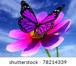 Beautiful Cosmos Flower And...