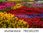 Small photo of Colorful tulips at a famous tulips park during tulips festival in Istanbul, Turkey.