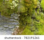 Small photo of moss accrued on stones, along which flows spring water