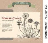 dandelion aka taraxacum... | Shutterstock .eps vector #782204161